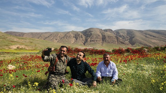 Sinjar poppies