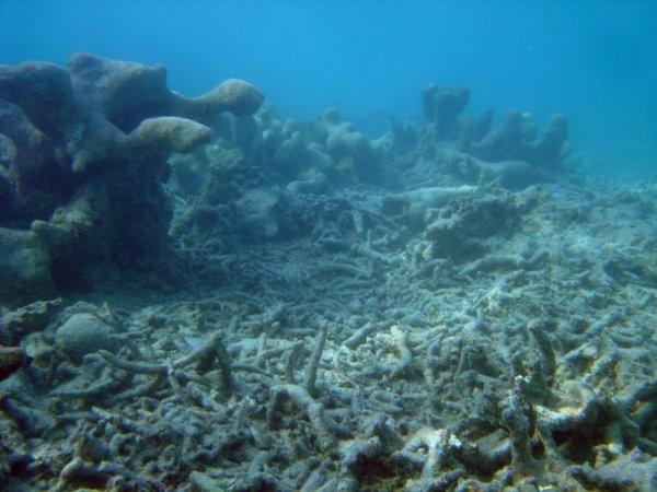 reef3206.jpg