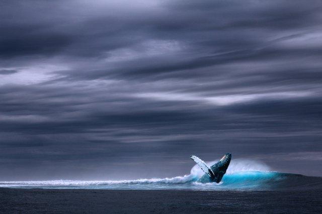 blue-whale-ocean-picture-327399.jpg