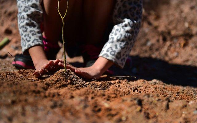 treeplant.jpg