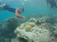 CoralBleaching2.JPG