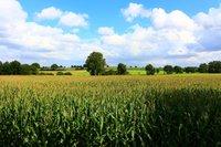 cornfield-2859252_1280.jpg