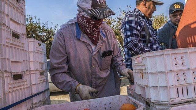 bacon farmworkers 07.jpg