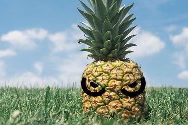 pineapple-in a field eyes.jpg.jpe