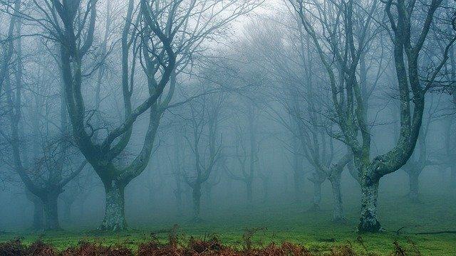 maxpixel.freegreatpicture.com-Dream-Forest-Dim-1653652.jpg