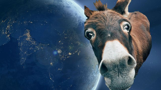 earth-1388003_1920donkey.jpg