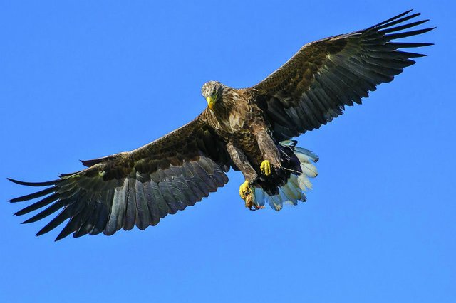 eagle-1753002_1280.jpg