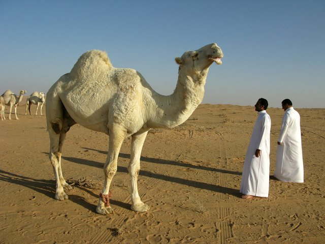 saudi-arabia-95500_1920.jpg