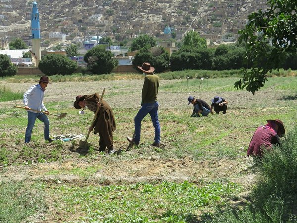 Working on a permaculture Plot at Kabul University.JPG