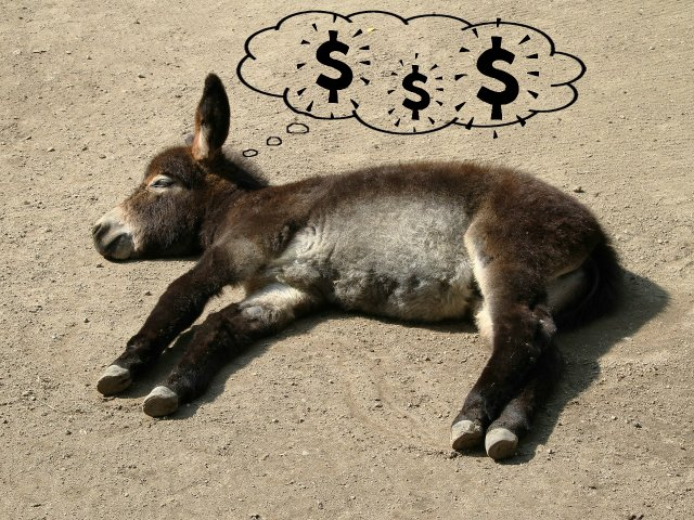donkey dream.jpg