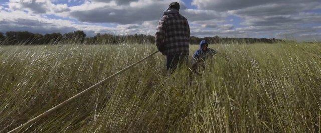 harvesting wild rice.jpg